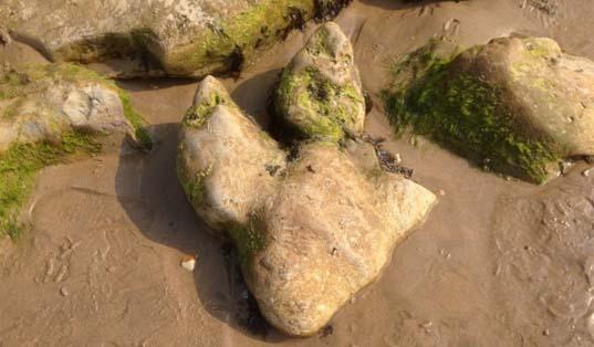 Dinosaur footprint cast (with broken toe), Brook Bay