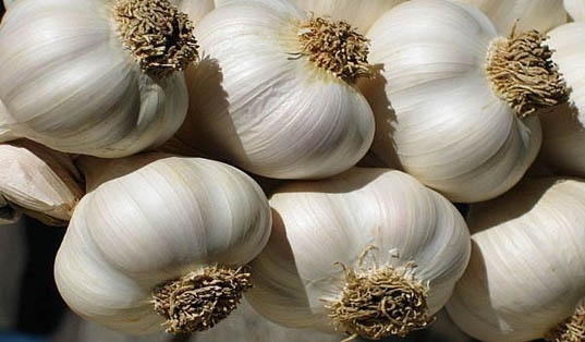 Garlic Festival, 16th - 17th August