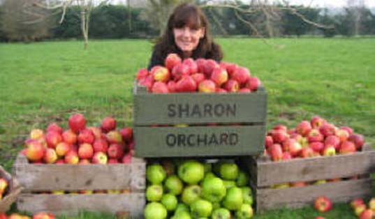 Sharon Orchard