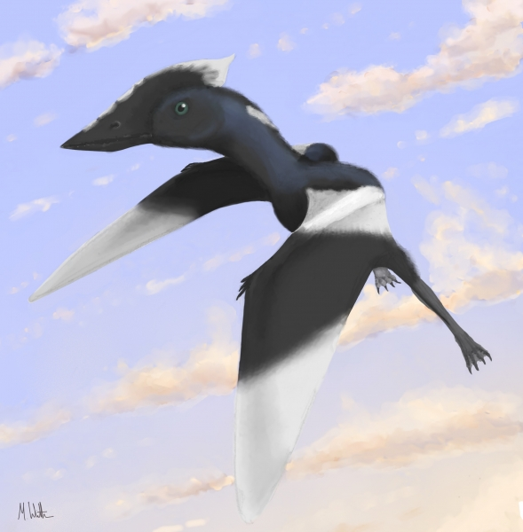 Artist's impression of Vectidraco daisymorrisae by Mark Witton, palaeoartist.